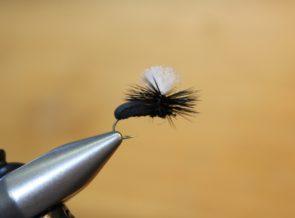 Parachute Beetle