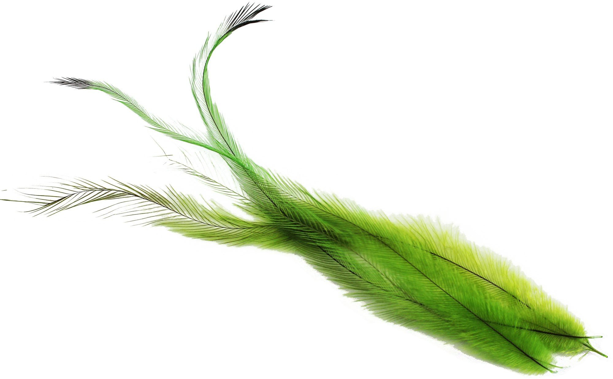 "UV2 ""big bird"" Emu feathers"