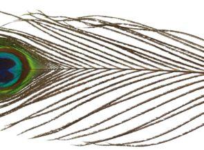 UV2 Peacock Eyes and Herl