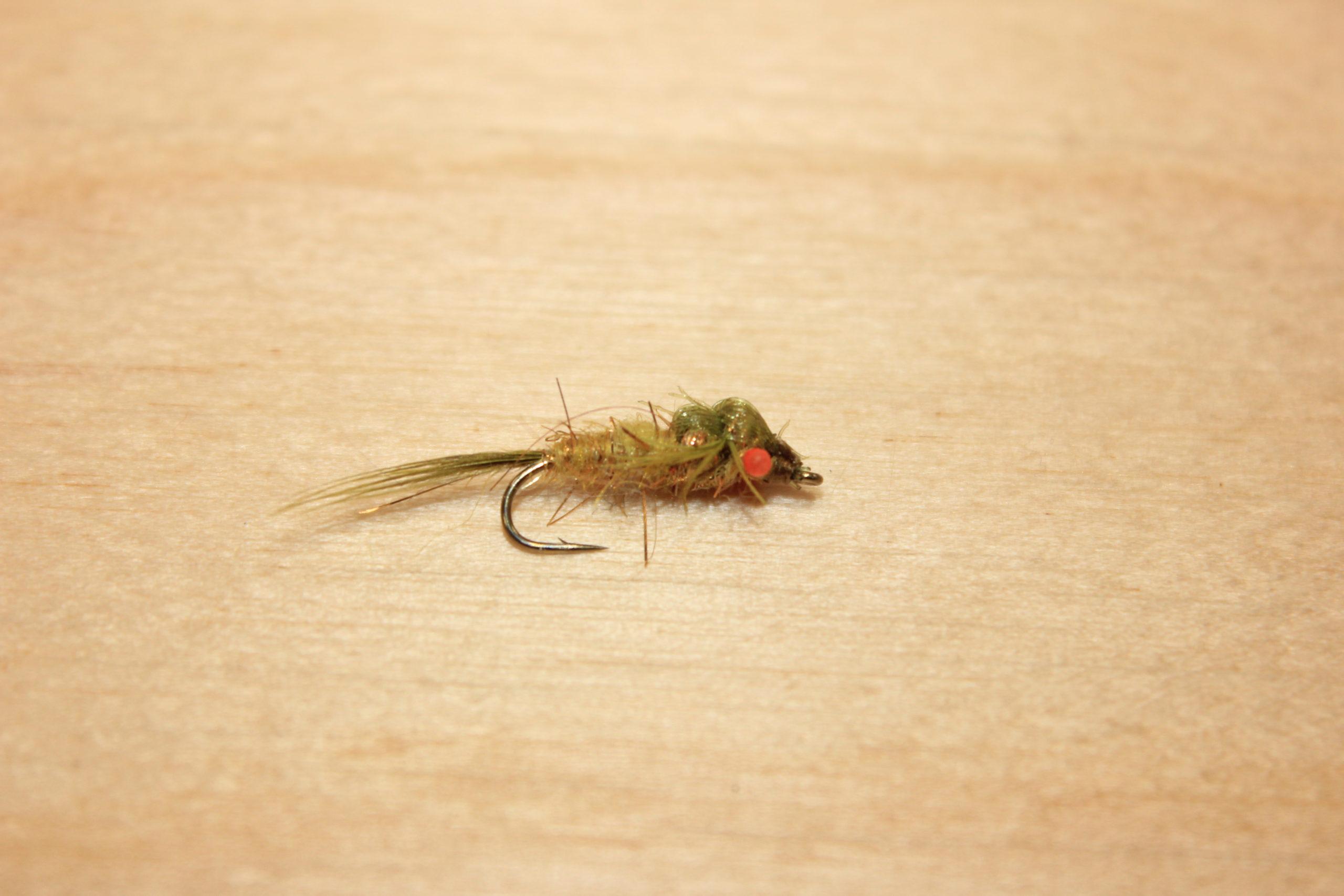 red eye damsel